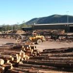 hyne-imbil-log-yard-2-2