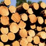 logs-dsc_1238-c-2